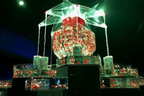 1月13日まで!屋内展示では史上最大「アートアクアリウム城」が熊本城ホールで開催中なので行ってみた!